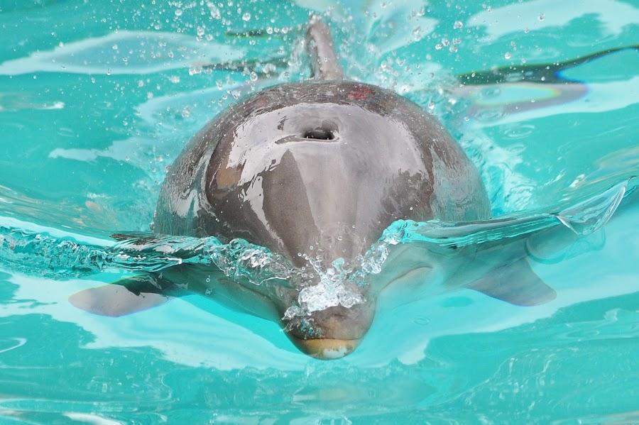 Dolphin by John Gross - Animals Sea Creatures ( dolphin, sea creature, ocean, cute, mammal )