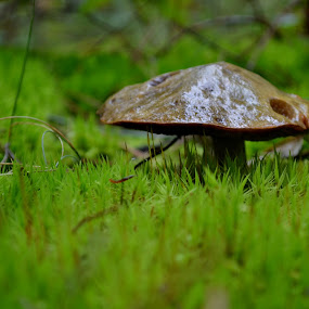 In the grass by Zec Mladen - Nature Up Close Mushrooms & Fungi ( mushroom, grass, green, green grass, mushrooms )