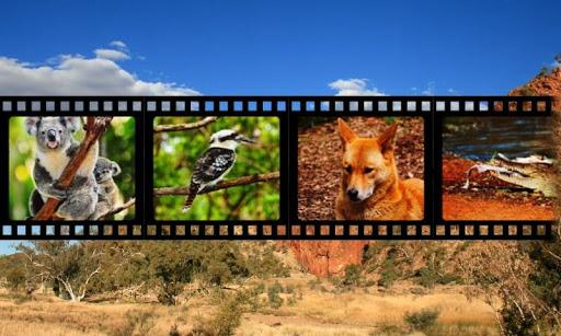 オーストラリアの動物の音