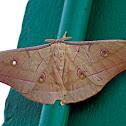 Tussar Silk Moth
