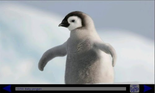 Penguin Gallery HD screenshot 0