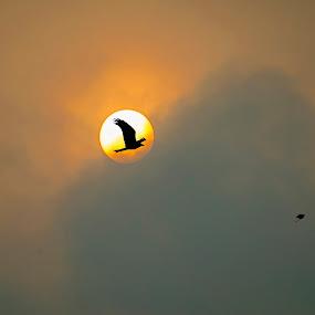 I will i can just watch me by Abhijeet Kumar - Animals Birds ( bird, eagle, sunset, parrot, landscapes, landscape, birds, sun )