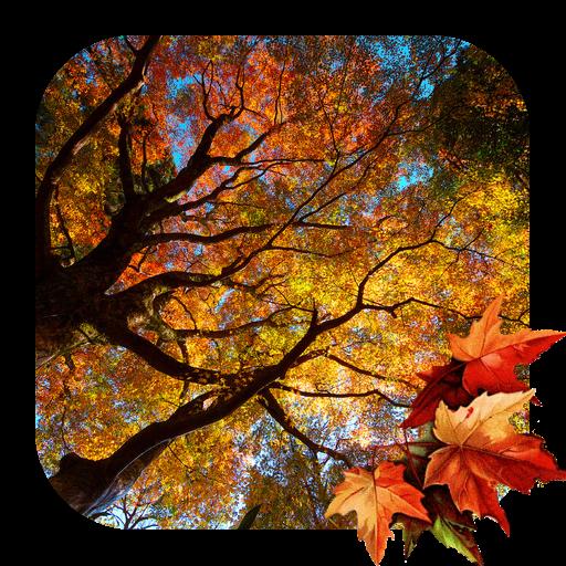 美しい秋のライブ壁紙 個人化 App LOGO-APP試玩
