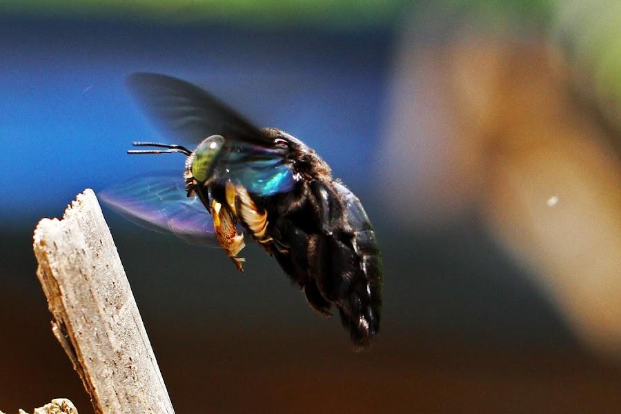landing by Dwianto Widjisaksono - Animals Other