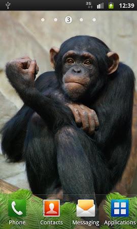 Funny Monkey Live Wallpaper 1.2.1 screenshot 322689
