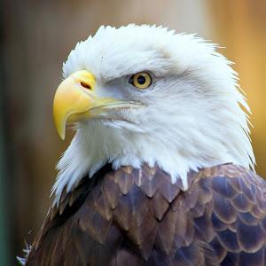 eagle 5.jpg