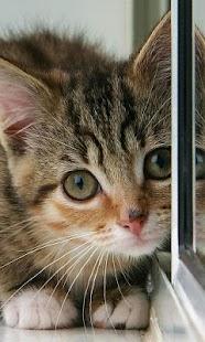 CatWall -LiveWallpaper