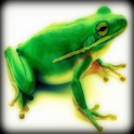 Frog Sound Effects logo