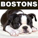 Boston Terriers and Rescue logo