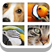 Close Up Animals - Kids Games
