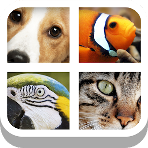 Close Up Animals for PC and MAC