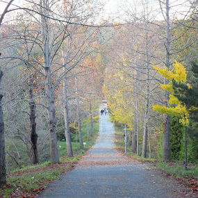 Arboretum by Halime Pelitçi - Landscapes Forests ( istanbul, arboretum )
