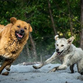 Born Free! by Shivaang Sharma - Animals - Dogs Running ( speed, run, har, doon, bhutia, dun, ki, nature, pahari, india, dog, motion, animal,  )