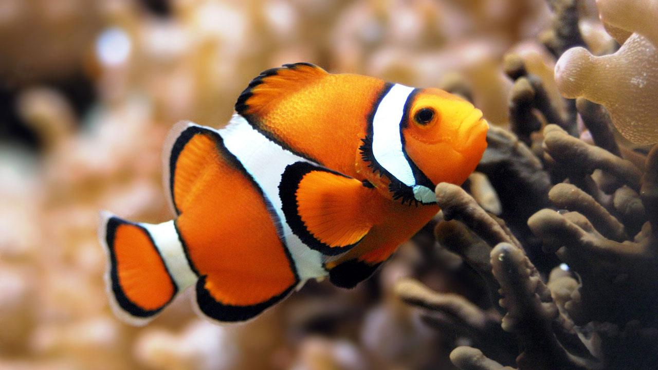 Animals Wallpapers HD - screenshot