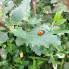 Ladybird:)