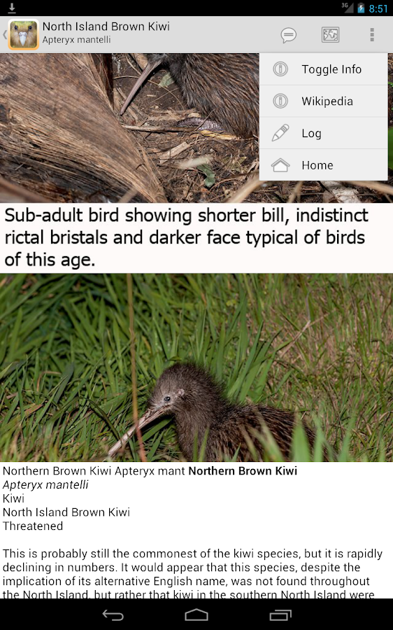 Birds of New Zealand- screenshot