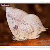 Leaf Blue Butterfly
