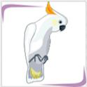 موسوعة الببغاوات icon