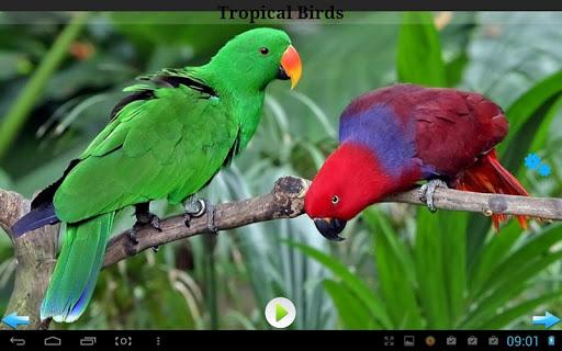 玩免費音樂APP|下載Best Nature Sounds app不用錢|硬是要APP