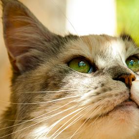 :-() by Luana Racan - Animals - Cats Portraits