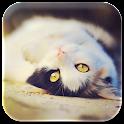 Cat lock & wallpaper icon