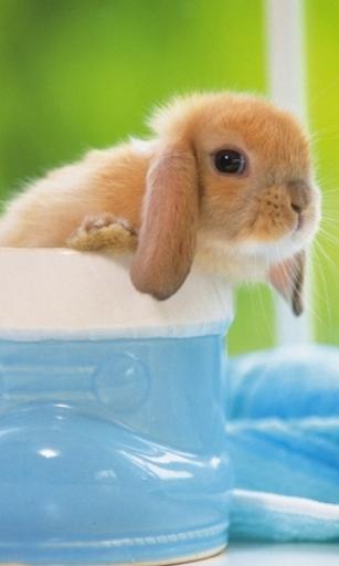 毛茸茸的小兔子壁纸