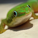 Dull day gecko