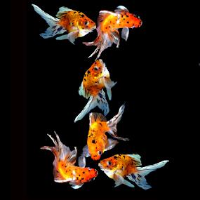 Goldfish I by Janna Morrison - Typography Single Letters ( i )