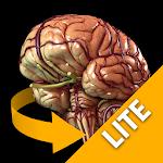 Brain 3D Anatomy Lite