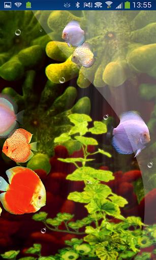 Coral Reef Aquarium HD LWP