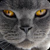 Cat Live Wallpaper Free (PRO)