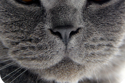 Cat Live Wallpaper Free Download