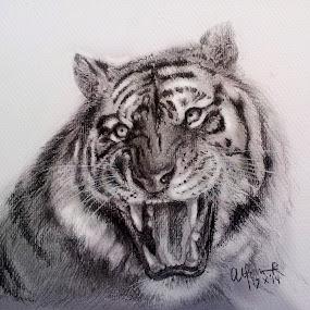 Panthera Tigris by Alfonso Rahardja - Drawing All Drawing