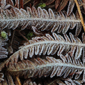 by Colin Wood - Nature Up Close Leaves & Grasses (  )