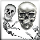 Dancing Skeletons Live Wall icon
