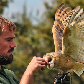 Falconer by Dean Thorpe - People Professional People