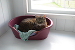 At Warley Cross Cattery all Cat Chalets have Large Private Sleeping Areas
