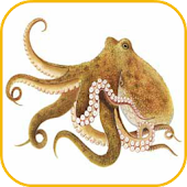 How To Draw Octopus Animal