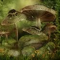Hidden Garden Forest