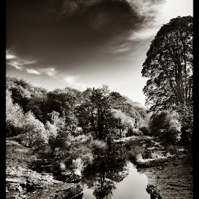 By the Liffey by Jacek Steplewski - Black & White Landscapes ( clouds, water, water reflection, reflection, sky, waterscape, black and white, trees, landscape, river,  )