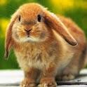 3D cute rabbit logo