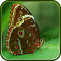 Butterfly Wallpaper icon
