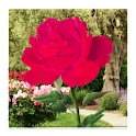 Rose Blooming Live Wallpaper icon