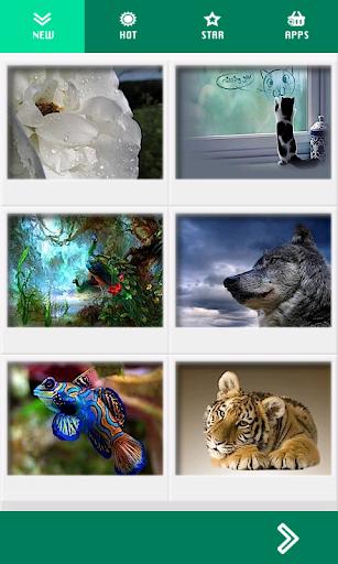 动物高清壁纸