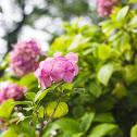 Pink flower balls