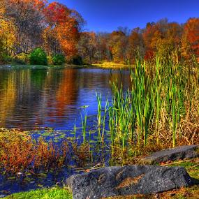 Muriel Hepner Park by Ward Vogt - Landscapes Waterscapes ( water, park, color, autumn, fall, muriel hepner, lake, rocks, pond, muriel hepner park, photography, ward vogt )