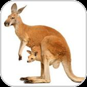 How To Draw Kangaroo