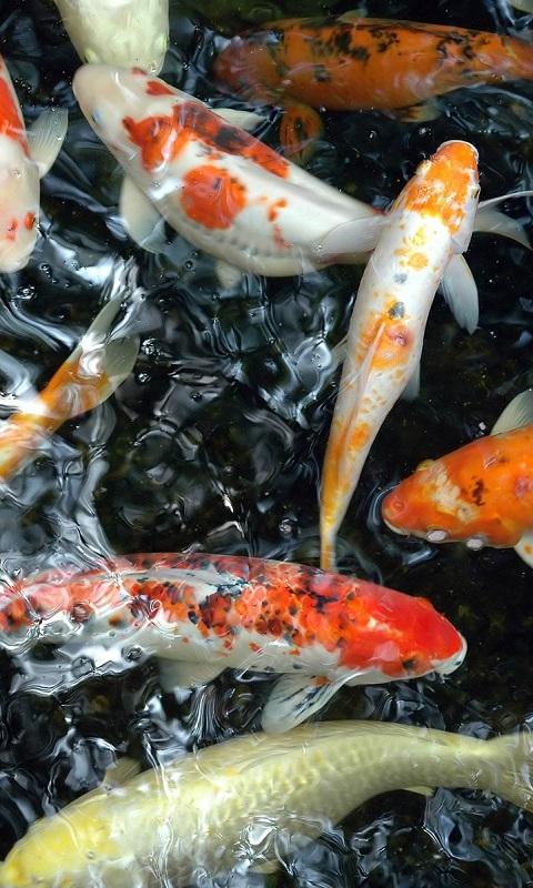 Unduh 610+ Wallpaper Gambar Ikan Bergerak HD Terbaik