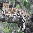 East African Biodiversity