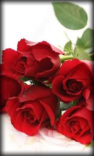 Roses Live Wallpaper 9jeezFArffwv9quX9tPO